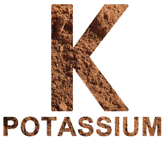 potassium-and-renal-diet